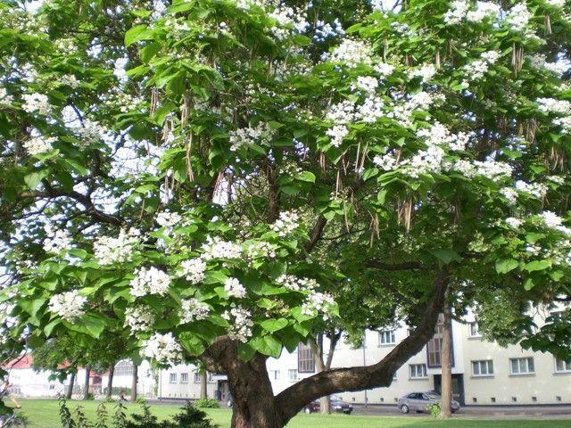 Prächtig Schöne Bäume 2   Helgas Garten &ZR_45