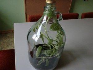 pflanzen in der flasche 2 teil helgas garten. Black Bedroom Furniture Sets. Home Design Ideas