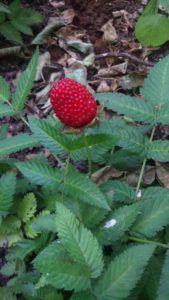 Erdbeer-Himbeere